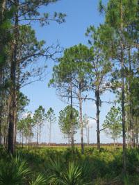 Duette Preserve - Duette, Florida
