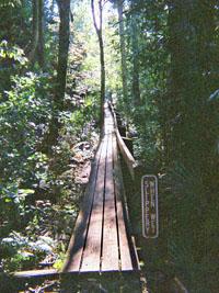 Highlands Hammock park